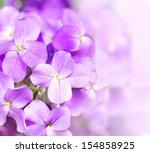 Beautiful Purple Flowers On...