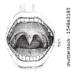 mouth  inside of the cavity  ... | Shutterstock .eps vector #154863185