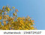 Autumnal Background With Copy...