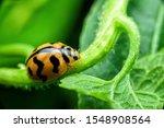 Ladybug With Yellow Stripes ...