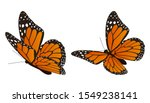The Monarch Butterfly Vector...