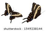 The Black Swallowtail Butterfl...