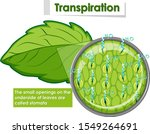diagram showing transpiration... | Shutterstock .eps vector #1549264691