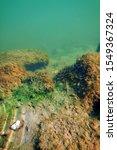 underwater freshwater flora ... | Shutterstock . vector #1549367324