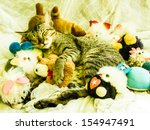 Stock photo the cat sleeping with various toys around 154947491