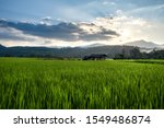 beautiful stepped rice field on ... | Shutterstock . vector #1549486874
