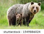 An Adorable Cub And Adult...