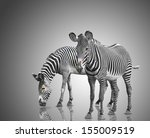 Two Zebras On A Gray Background