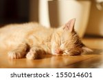 Stock photo cute ginger kitten sleeping on the floor 155014601