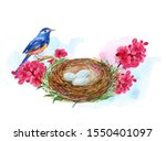 Bird In A Nest With Eggs ...
