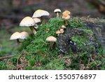 Funny  Little Mushroom...