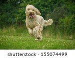 Stock photo dog 155074499