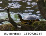 Stock photo photo of a tortoise in a park with selective focus and sunlight 1550926364