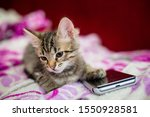 Stock photo the striped kitten lies on a pink blanket the kitten put a paw on the smartphone phone sad kitten 1550928581