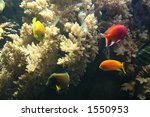 under water | Shutterstock . vector #1550953