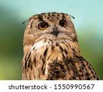 Portrait Of An Owl Bird Close...