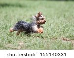 Stock photo yorkshire happy running in the park 155140331