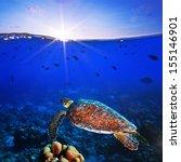 sea turtle swimming over... | Shutterstock . vector #155146901