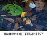 Yellow Dead Leaves In Water.
