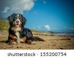 Stock photo dog 155200754