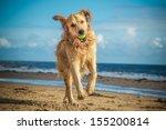 Stock photo dog 155200814