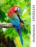 colorful macaw  greenwinged... | Shutterstock . vector #155201141