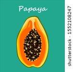 vector colored papaya sketch... | Shutterstock .eps vector #1552108247