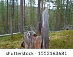 tree trunk in hossa national...