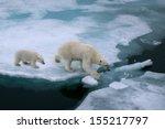 high angle of mother polar bear ...