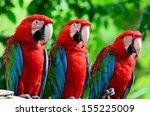 The Beautiful Birds Greenwinge...