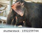National Park. Cute Elephant...