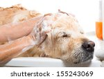 a dog taking a shower with soap ...   Shutterstock . vector #155243069