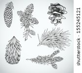 parts of fur tree and pine tree ... | Shutterstock .eps vector #155245121