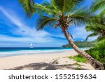 Exotic Beach With Coconut Palm...