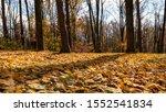 Fall Foliage At Eagle Creek...