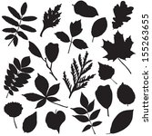 collection of different leaves... | Shutterstock . vector #155263655