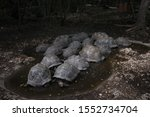 Stock photo zanzibar tortoise at prison island changu island zanzibar local and tourist visit prison island 1552734704