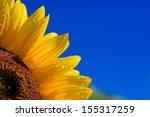 Sunflower Close Up Against Dar...