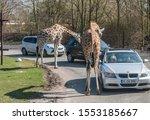 Hodenhagen  Germany   March 30  ...