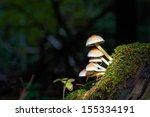 Mushroom Kingdom . Picture Of ...