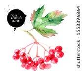 watercolor viburnum berries... | Shutterstock . vector #1553396864