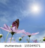 Butterfly On A Daisy. Against...