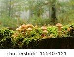Family Of Fungi On A Tree...