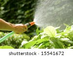 Female Hand Watering The Plant...