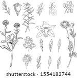 hand drawn botanical...   Shutterstock .eps vector #1554182744