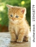 Stock photo cute red kitten with blue eyes sitting on wooden table against green summer bokeh 155418779