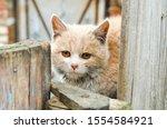 Domestic Kitten Sitting On The...