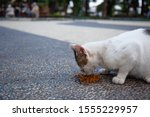 A Cat Being Street Fed In The...