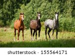 Group Of Three Horses Standing...