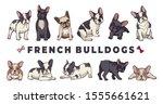 french bulldogs. vector bulldog ... | Shutterstock .eps vector #1555661621